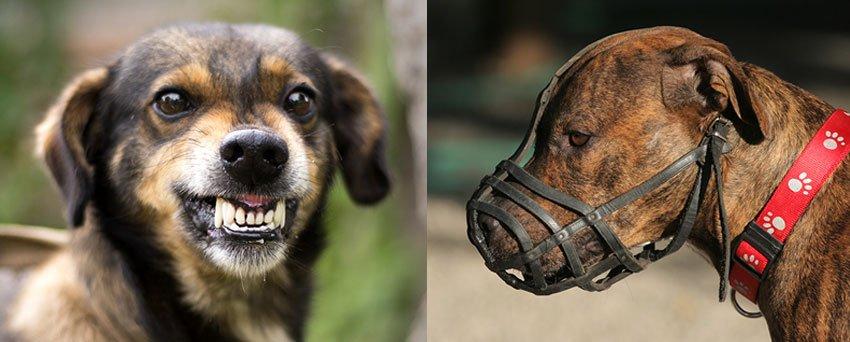 raças cães perigosas