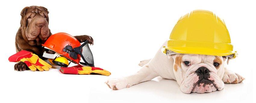 seguros para cães