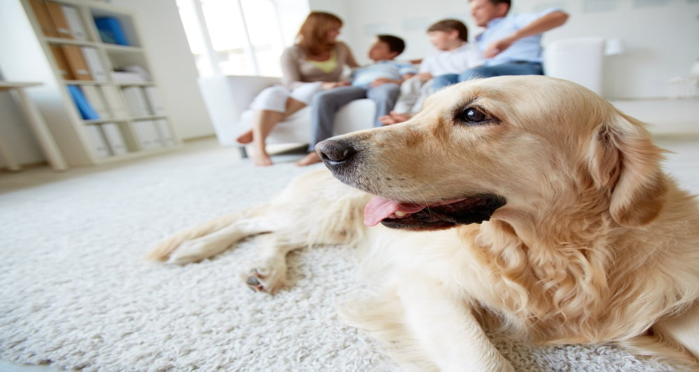 Pandemia cães