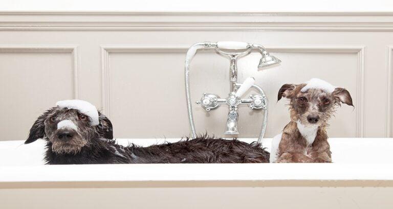 importancia do banho
