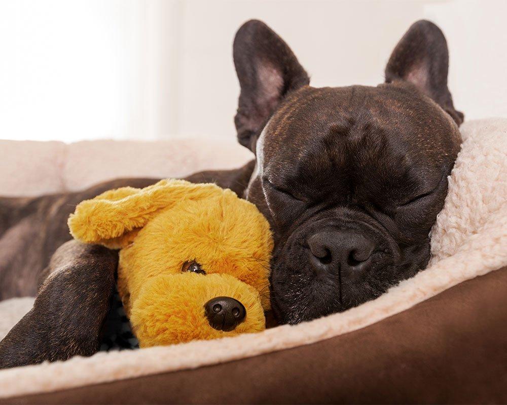Cão a dormir