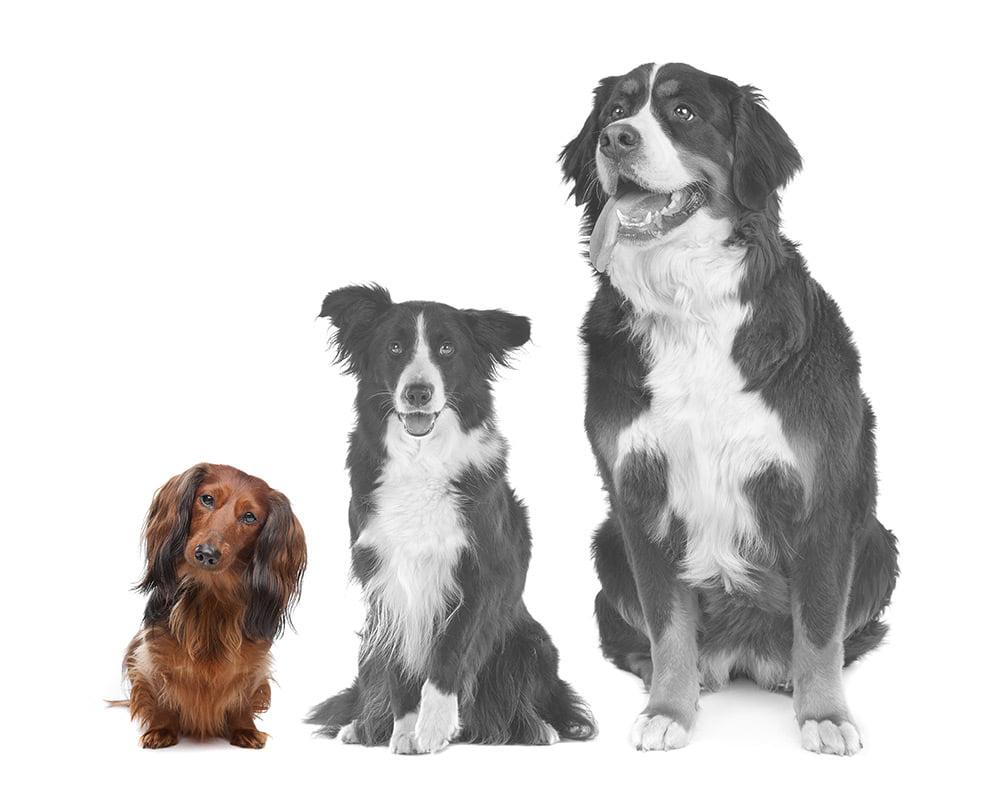 Cães diversos