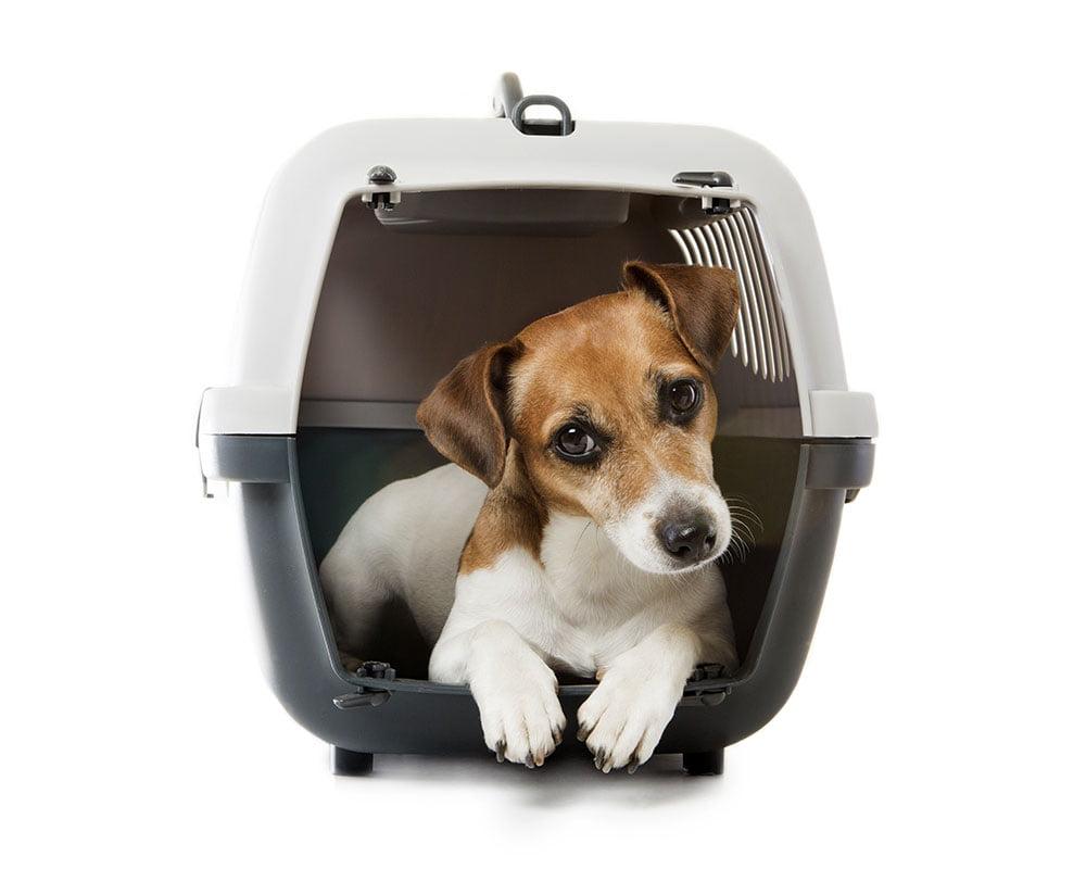 Cão na transportadora