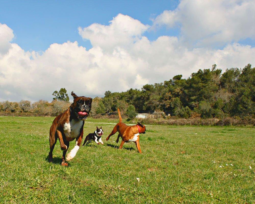 Cães a correr