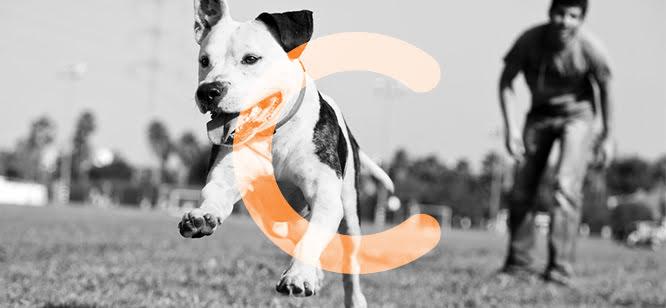 Cão a correr