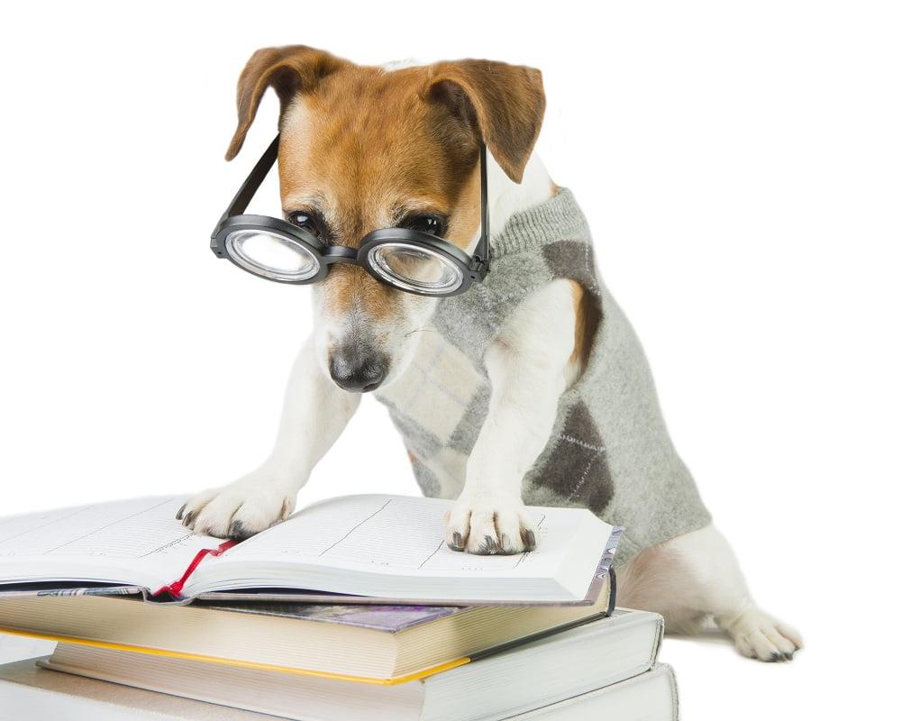 Cão a ler
