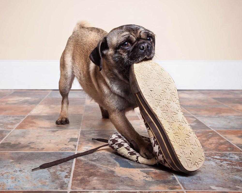 Cão e Sapato