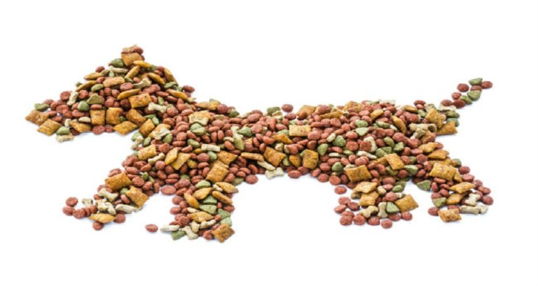boa alimentacão cães gatos