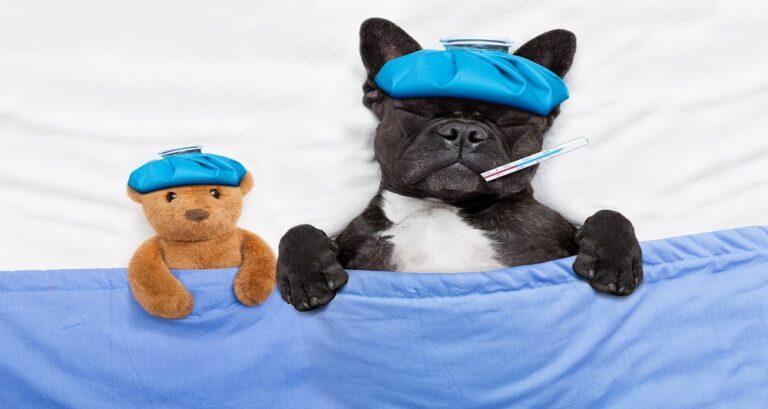 coronavirus e cães
